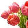Limbajul florilor de primavara